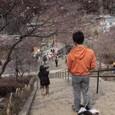 亜吉野梅郷散歩