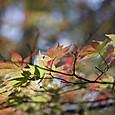 八ヶ岳の紅葉