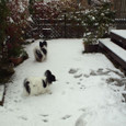 雪にはしゃぐピーターと部屋に逃げるマロン